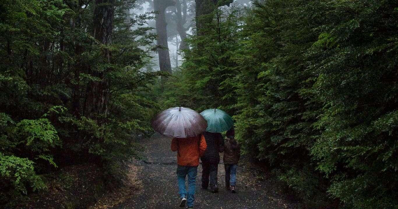 Caminando Parque Nacional Huerquehue