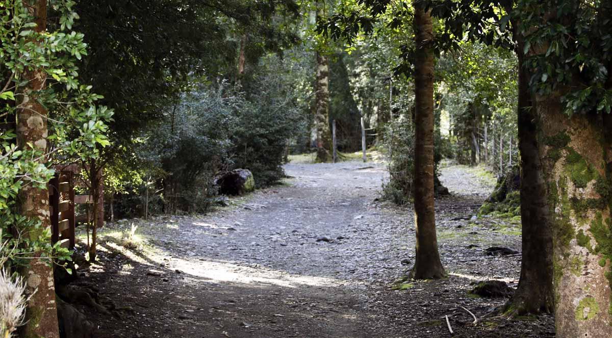 Sendero Parque Nacional Huerquehue