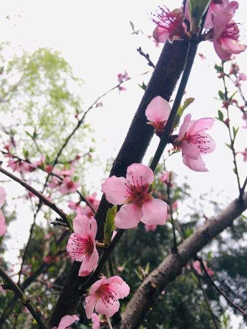 Primavera en Pucón