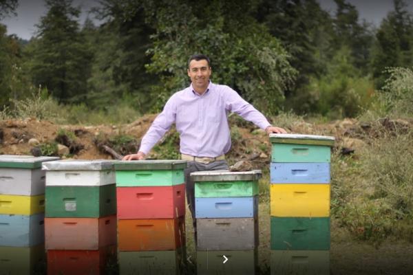 Montaña Bee, Miel Natural