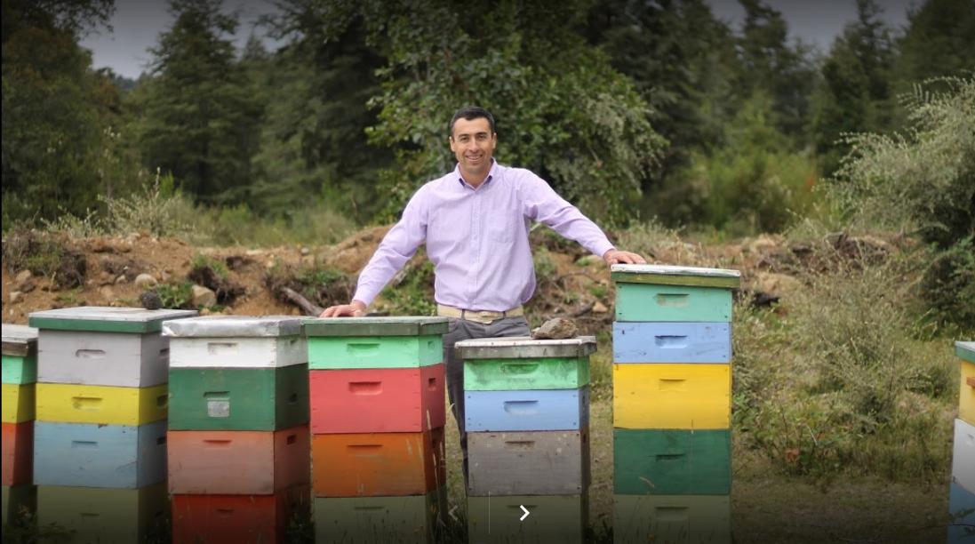 Vota por Montaña Bee en la Selección Nacional de Pymes de Sercotec
