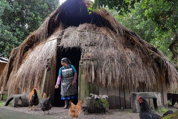 Turismo Mapuche Pucón